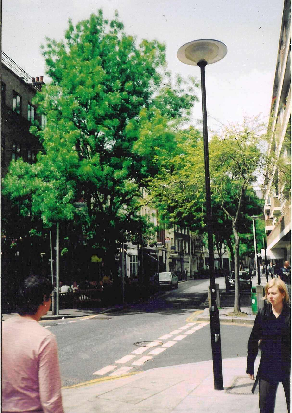 Endell Street trees planted in 1984. Part of the work of the Housing Action Area Committee, forerunner of the Trust.